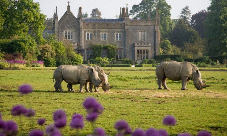 Luxury in the Cotswolds - Cotswolds Wildlife Park